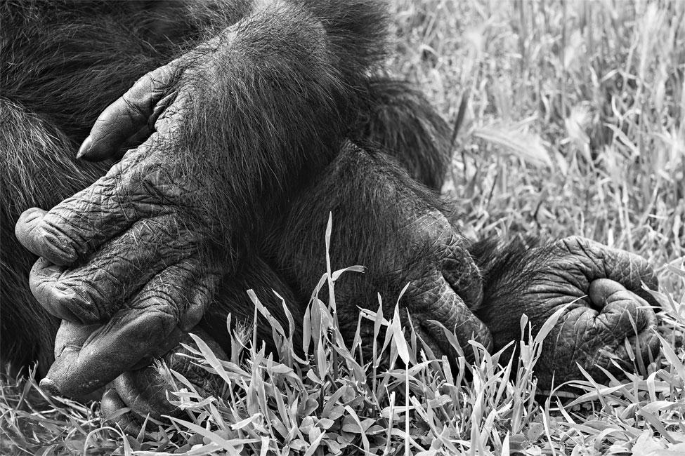 manos y pies de bongo_apunte 0031