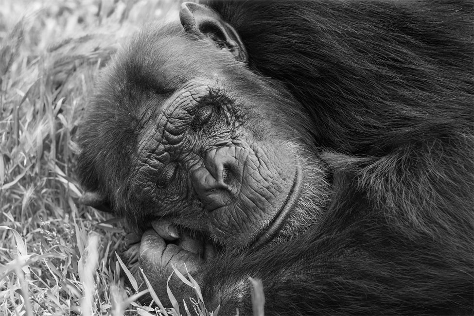 la siesta de bongo II_apunte 0093